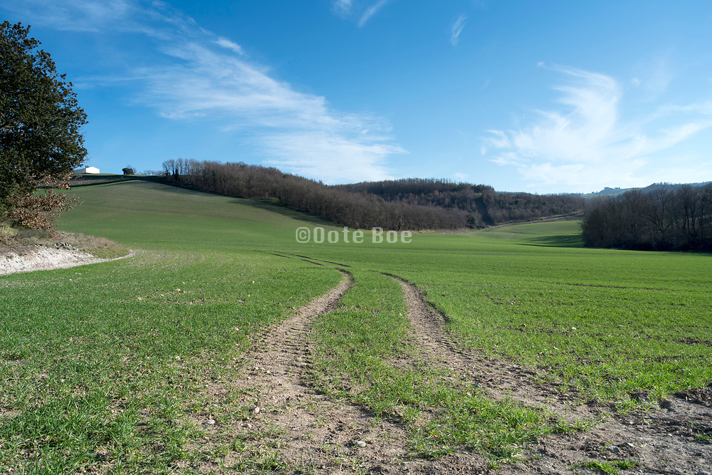 tractor tracks during early spring in a large grass field region Razes of the Languedoc France