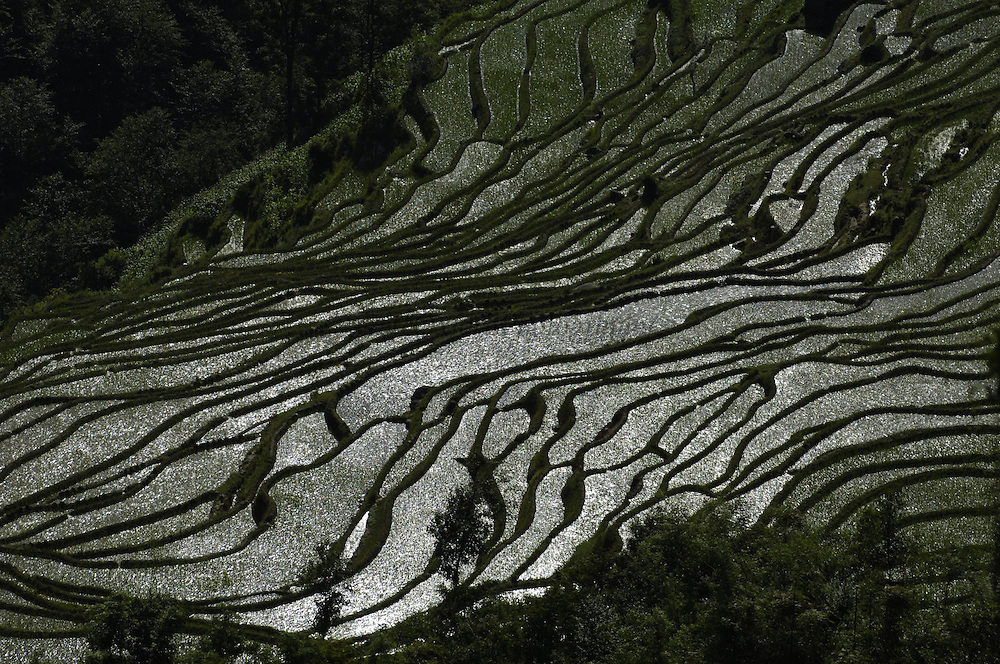 Rice terraces of the Ailao Mountains between the Red River and Vietnam. Honghe Prefecture, Yuanyang. Yunnan Province. CHINA<br />These terraces are mottled with villages all the way up the slopes, separated by little clumps of forest and great swaths of terraced fields. They are cut into every contour of the slopes, at angles up to 70 degrees and are the most ancient and the most impressive in the entire region. Most are irrigated and filled with water all year round. They are mostly used to only grow rice and so in the dry months of winter they are empty of crops. Some of the terraces have been producing rice for over a thousand consecutive years. In Ailaoshan the water from high mountain springs and creeks is channeled in ditches that are directed to run throughout the farming area. Divider stones and bamboo tubes divert part of the water from the main irrigation channel to individual terraces, from these dropping through notches in the terrace walls to feed those below and so on all the way to the bottom.<br />These terraces were built by Hani, Yi and Dai Ethnic minority peoples.