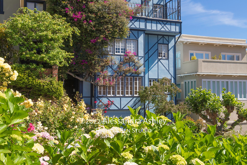 """San  Francisco's Lombard Street hydrangea gardens and adjacent homes. The gardens line what is locally described as """"the world's crookedest street."""""""