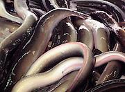 Nederland, Boxtel, 25-8-2001Paling. Kwaliteit vis.Foto: Flip Franssen/Hollandse Hoogte