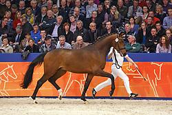 433 - Guardiola<br /> KWPN Stallion Selection - 's Hertogenbosch 2014<br /> © Dirk Caremans