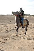 Bedouin Shepherd on his horse. Israel, Negev Desert