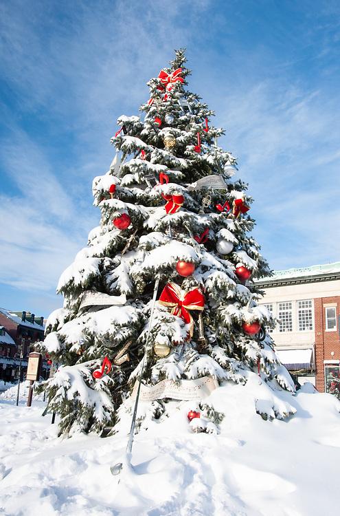 Annapolis Citidock Christmas tree