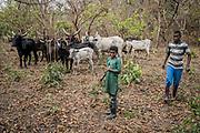 Des éleveurs nomades venus du Darfour veillent sur leur bétail en bordure de la réserve de Chinko, dans l'est de la République centrafricaine. À la recherche de pâturages, ces bergers doivent aujourd'hui modifier leurs itinéraires et contourner la réserve de Chinko, gérée par l'ONG sud-africaine African Parks.