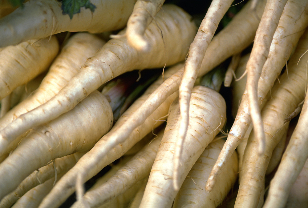 Close up selective focus photograph of a bunch of raw Parsnips