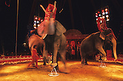 """Elephants performing at the circus during the Feria de Sevilla. The majority of elephants used in circuses were captured in the wild when they were babies. The circus portrays itself in a fun, loving light. The truth behind that is there is many animals endure cruelty for human entertainment. ..The Feria de abril de Sevilla, """"Seville April Fair"""" dates back to 1847. During the 1920s, the feria reached its peak and became the spectacle that it is today. It is held in the Andalusian capital of Seville in Spain. The fair generally begins two weeks after the Semana Santa, Easter Holy Week. The fair officially begins at midnight on Monday, and runs six days, ending on the following Sunday."""