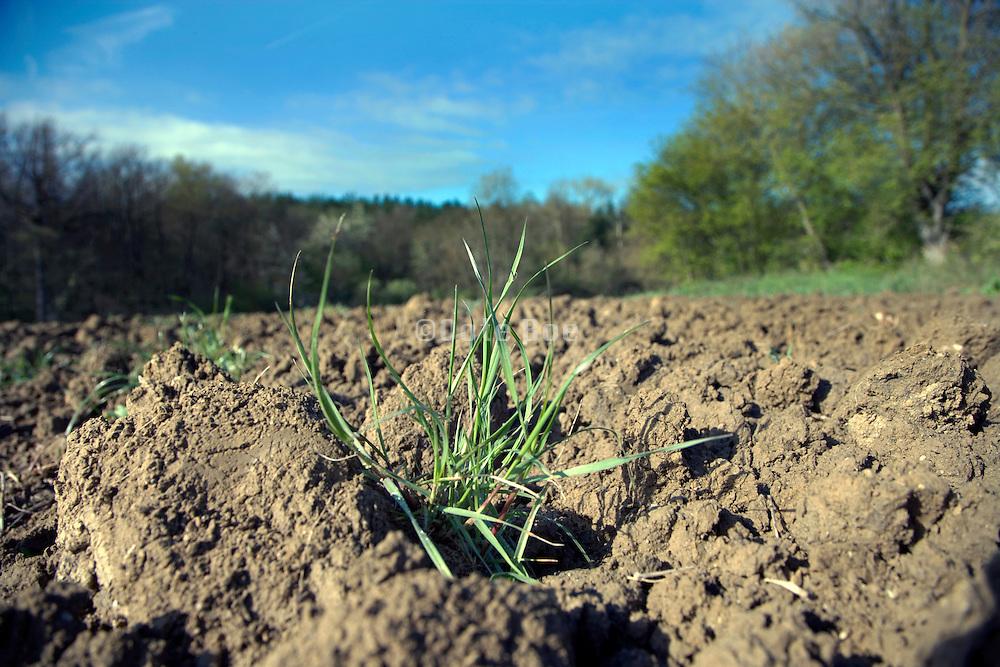 grass growing in a plowed field