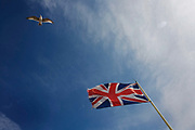 A lone seagull circles above the British Union Jack Flag which flies in a stiff breeze, its colours of red-white and blue almost wholly horizontal as the wind tears through the blue skies and beneath thin, high clouds above Brighton East Sussex, England UK. Tied to its flag-pole, this symbol of patriotic nationalism, evokes a sense of pride and spirit the British are known for - having encouraged them through two world wars and more recently, other military campaigns. The colours (colors) of Scotland's blue and white crosses and the English cross of St. George are merged to make this well-known symbol of the British Isles.
