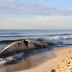 2014-October-10th Beached Whale
