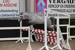 01 - Ronaldo van de Nieuwe Heide<br /> BrP Keuring <br /> Hulsterlo - Meerdonk 2017<br /> © Dirk Caremans<br /> 17/03/17