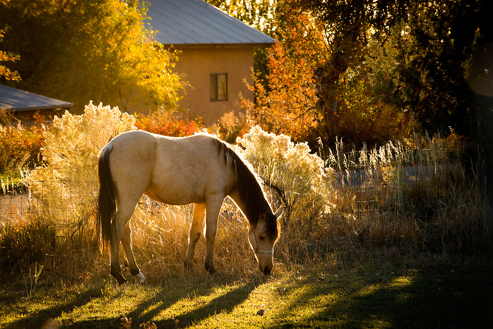 Autumn vignette on the road to Seco, Arroyo Seco, New Mexico