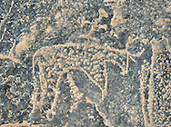 Prehistoric Saharan petroglyph rock art carvings of cattle with a man riding on its back from a site 20km east of Taouz, South Eastern Morocco .<br /> <br /> Visit our MOROCCO HISTORIC PLAXES PHOTO COLLECTIONS for more   photos  to download or buy as prints https://funkystock.photoshelter.com/gallery-collection/Morocco-Pictures-Photos-and-Images/C0000ds6t1_cvhPo<br /> <br /> Visit our PREHISTORIC PLACES PHOTO COLLECTIONS for more  photos to download or buy as prints https://funkystock.photoshelter.com/gallery-collection/Prehistoric-Neolithic-Sites-Art-Artefacts-Pictures-Photos/C0000tfxw63zrUT4