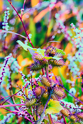 A Macro Shot of a vibrant thistle patch in a field at Busch Wildlife