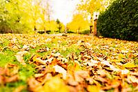 Autumn colour s on the in stratford upon Avon