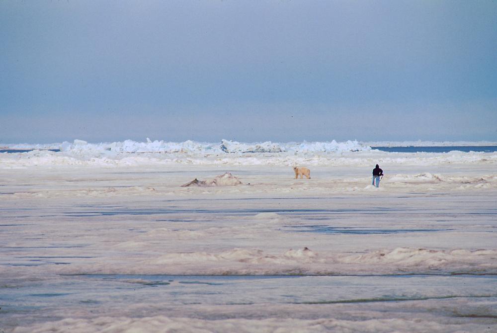 Alaska. Barrow. Polar bear and photographer on sea ice in the Chukchi Sea.