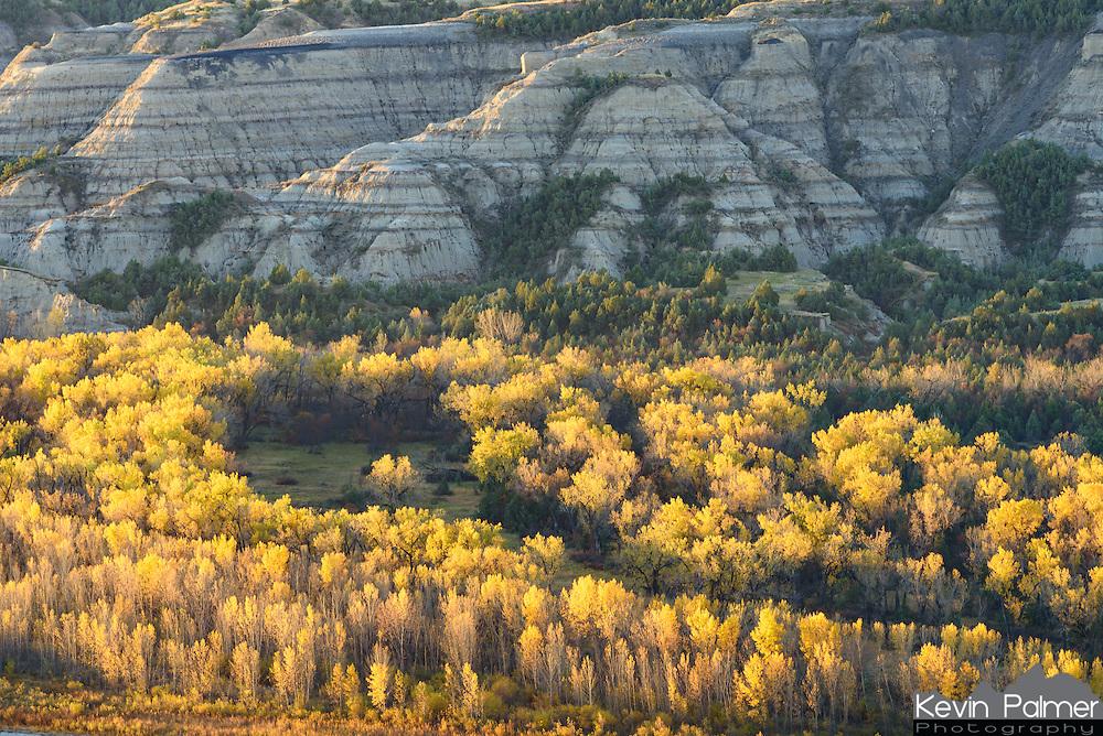 Golden cottonwood trees glow under the badlands of Theodore Roosevelt National Park.