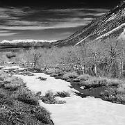 McGee Creek Lower Trail Head - Eastern Sierra - Black & White