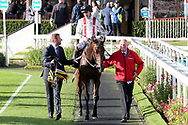 HAMISH (1) ridden by Daniel Tudhope and trained by William Haggas enter the Winners Enclosure after winning The Racebets Handicap Stakes over 1m 6f (£100,000)   during the October Finale Meeting at York Racecourse, York, United Kingdom on 11 October 2019.