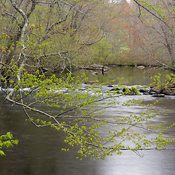 Spring on the Eight Mile River at the Nature Conservancy's Pleasant Valley Preserve in Lyme, Connecticut.