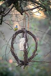 Tits on bird feeder