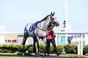 Thegreyvtrain ridden by K T O'Neill and trained by R Harris - Mandatory by-line: Robbie Stephenson/JMP - 25/06/2020 - HORSE RACING - Bath Racecoure - Bath, England - Bath Races 25/06/20