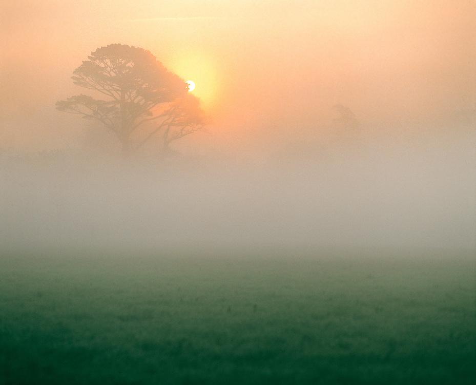 The rising sun breaks through the mist near Dartington, Devon, England.