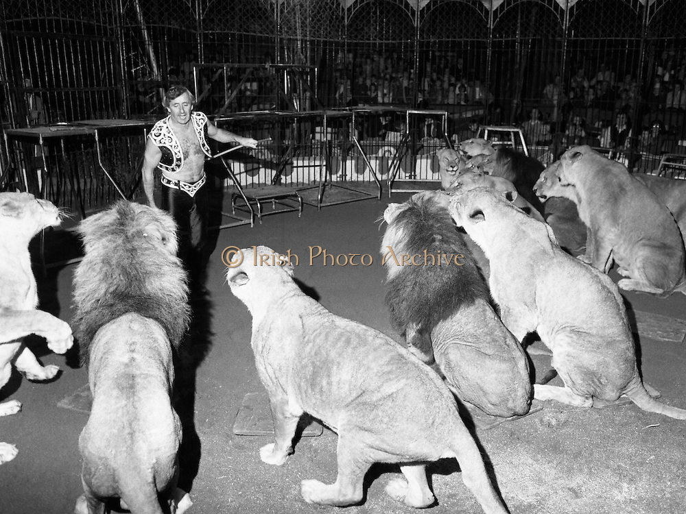 08.09.1984<br /> 09.08.1984.<br /> 8th September 1984.<br /> Chipperfield's circus performed before packed houses in Mullingar, Co Westmeath.<br /> <br /> Picture of Mr Richard Chipperfield, cracking the whip,as he leads his pride of lions through their routine.The pride is made up of both lions and lionesses.