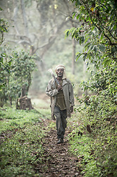 Awol Abagojam lives  in the village of Choche, in Jimma which people say is  the birthplace of coffee. The region is home to the largest pool of genetic diversity in the world of coffee. It is home to more genetic diversity in coffee than the rest of the producing countries combined by a huge margin.