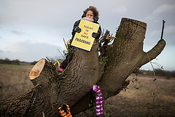 """© Licensed to London News Pictures . 26/01/2014 . Salford , UK . A girl holds a """" There is no safe fracking """" sign on a chopped tree adjacent to the protest camp . Protesters march to an iGas fracking exploration site at Barton Moss , Salford , today (Sunday 26th January 2014) . A long term protest camp has been established on an access road leading to the site and today (26th January) protesters from other areas of the country travelled to the site to join with other protesters against fracking . Photo credit : Joel Goodman/LNP"""