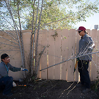Nathan Begay, left, and Loren Mescale helping to clean up an alley in the Mossman neighborhood, Wednesday, Sept. 12, 2018. The clean-up crew are graduates of Rehoboth McKinley Christian Substance Abuse Treatment Center and are removing trees, shrubs and brush from the alleyways as a preventative measure to curb break-ins in the area.