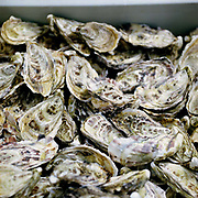 Skye oysters from Loch Harport at The Three Chimneys Restaurant, Colbost, on the Isle of Skye. Chef and director Michael Smith and his kitchen team, create dishes which reference Scotland's rich culinary heritage and wealth of ingredients. Their menus reflect the variety of Skye's natural larder from the land and sea.