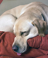 PET OWNERS have been urged not to abandon their animals  as there is 'no evidence' the coronavirus can be transmitted from domestic pets to humans photo by Michea Butterworth