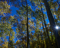 Autumn Aspen Forest in Colorado. Gone to See America 2013. Image taken with a Leica X2 camera (ISO 100, 24 mm, f/16, 1/125 sec). Colorado Rocky Mountain Photo Safari with Jason Odell.