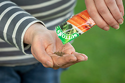 Pouring carrot seed from a packet into hands ready to sow
