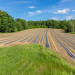 Vegetable fields in spring in a field on Pearl Farm in Loudon, New Hampshire.