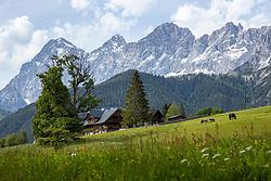 THEMENBILD - Das Dachsteinmassiv ist eine Gebirgsgruppe der Nördlichen Kalkalpen im Bereich der nördlichen Steiermark, des östlichen Salzburg und des südlichen Oberösterreich. Hier im Bild Pferde Weiden vor einen Bauernhof auf einer Wiese in Ramsau in Hintergrund das Dachsteinmassiv mit den Gipfel von links: Torstein, Mitterspitz, Hoher Dachstein, Hunerkogel. Ramsau am Mittwoch 4. Juni 2020 // The Dachstein massif is a mountain group of the Northern Limestone Alps in the area of northern Styria, eastern Salzburg and southern Upper Austria. Here in picture: Horses graze in front of a farm on a meadow in Ramsau in the background the Dachstein massif with the peaks from the left: Torstein, Mitterspitz, Hoher Dachstein, Hunerkogel. Ramsau, Austria on Wednesday June 3, 2020. EXPA Pictures © 2020, PhotoCredit: EXPA/ Johann Groder