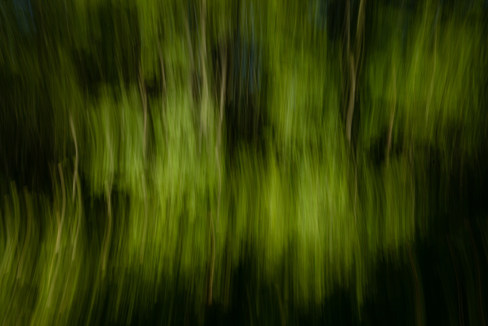 An abstract view of the vibrant green forests of Minuteman National Park.