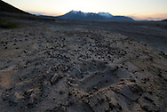A bear paw print in the pyroclastic flow of the Novarupta Volcano in the Valley of Ten Thousand Smokes, Alaska.