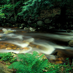 Stratton, VT. Ferns and hemlock trees along Broad Brook in Vermont's Green Mountains.