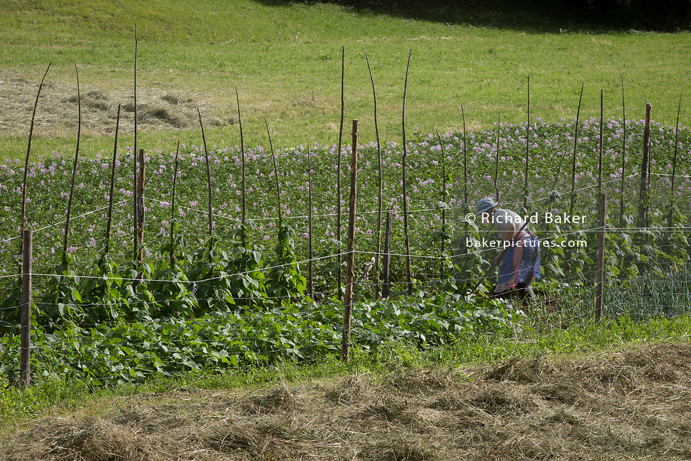 A rural Slovenian woman tends crops, on 18th June 2018, in Bohinjska Bela, Bled, Slovenia.