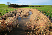 River Kennet flowing through reeds across fields at West Kennet, Wiltshire, England, UK