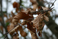 Autnmn leafs