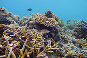 Snorkeling, Coral Reef, Yasawa Island Resort and Spa, Yasawa Islands, Fiji