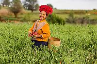 KALAW, MYANMAR - DECEMBER 07, 2016 : woman tribe harvesting red chili near Kalaw Shan state in Myanmar (Burma)