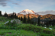 Early morning light on Mount Rainier from above Upper Tipsoo Lake in Mount Rainier National Park, Washington State, USA
