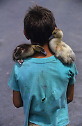 A Gitan boy with two ducks on his shoulders<br /><br />Europe, France, Camargue, Saintes Maries de la Mer. The seaside town in the Camargue hosts a Gypsy festival once a year during May, where its landscape undergoes great changes. Otherwise it is a land bordered by sea, lakes and ponds, populated by flamengos, bulls and horses.