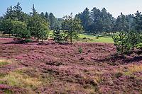 LEUSDEN  -  hole 16 en 17, Golfclub de Hoge Kleij  COPYRIGHT KOEN SUYK