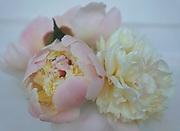 Floral arrangements, Peony