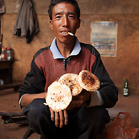 The Sha family,  Yi ethnic family who lives in the mountaintop settlement of Xito sell their daily harvest to a mushroom trader Yang Jiaping from Shaxi valley, Yunnan province China. The trader wil bring the mushrooms down the mountain to sell to traders in Sideng town who will then transport the mushrooms to the big mushroom market in Kunming, the provincial capital of Yunnan.