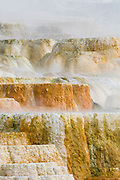 Steaming and overflowing mineral terraces at Mammoth Hot Springs, Yellowstone National Park, Wyoming.